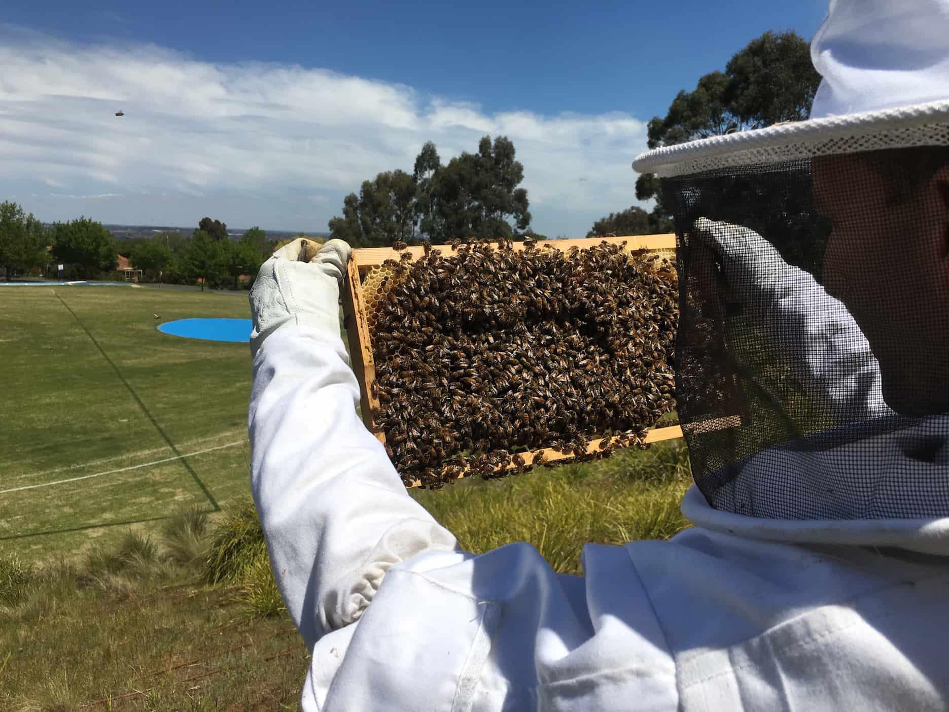 Student beekeepers