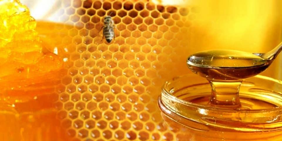 Honey For Sale - Ben Bees