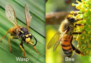 9wasp-bee.jpg.638x0_q80_crop-smart