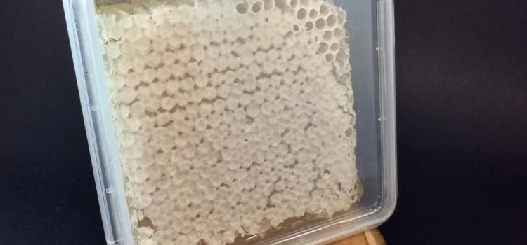 Pure Honey Comb