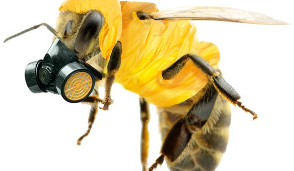 Bees vs. Big Business.  Neonicotinoids; an insidious threat. Part 2.