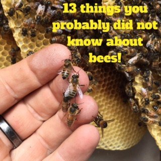 13 things you probably did not know about bees