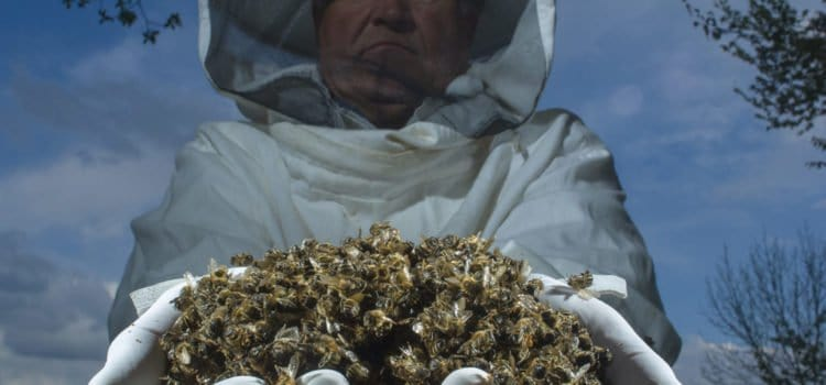 What is Colony Collapse Disorder?