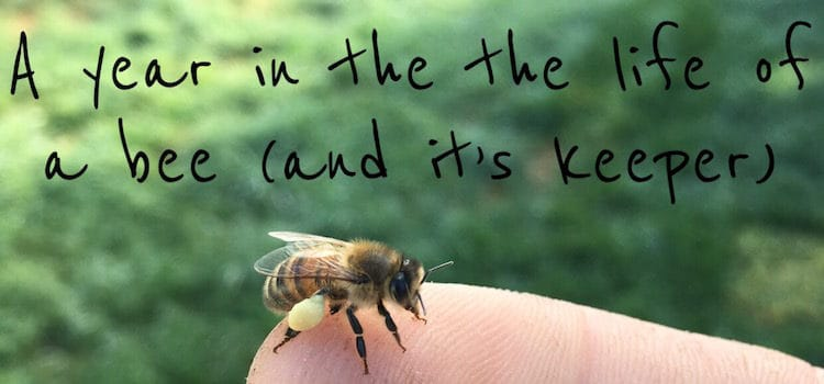 A Year in the Life of a Bee (and It's Keeper)