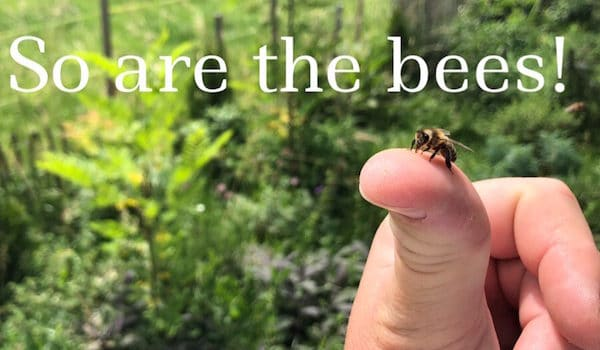 Stressed Out? So Are the Bees