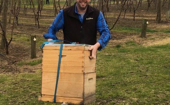 Moving Bee Hives Safely in Melbourne