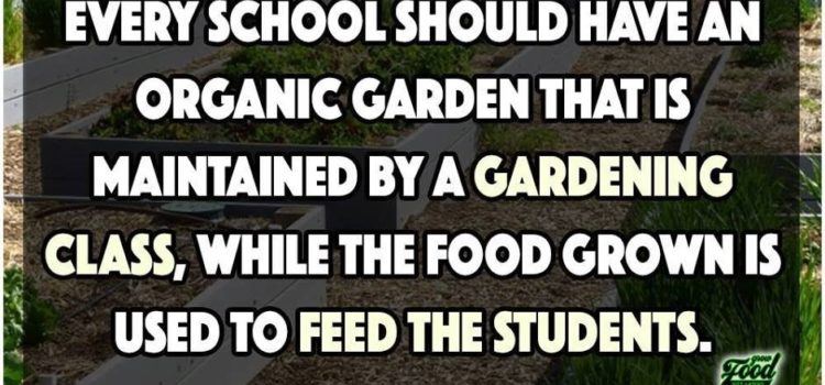 The School Vege Patch Revolution