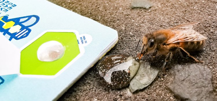 Feeding Cards Save Tired Bees