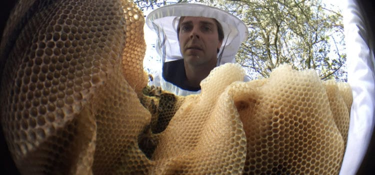 Simon Mulvany from Save the Bees