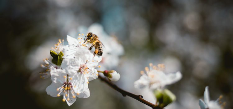 What is a Pollen Signature?