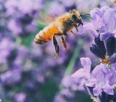 Bees and Flora: The Rules of Attraction