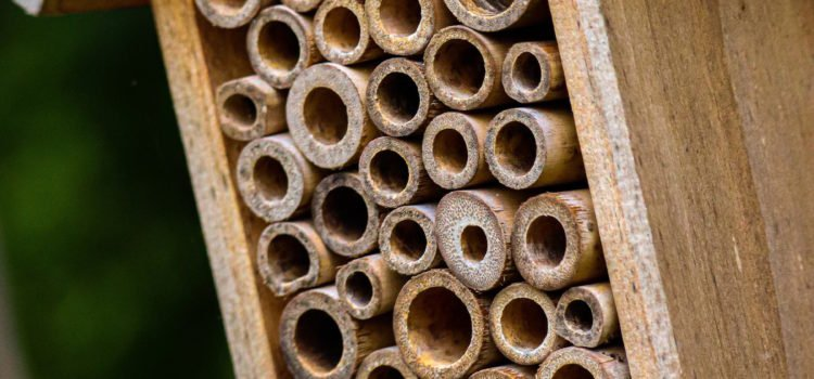 Vacancy at the Bee Hotel