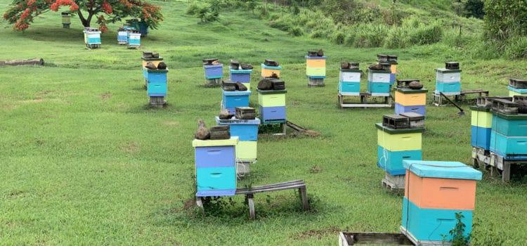 Beekeeping In Fiji