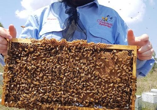 PODCAST EPISODE 14: Michael Kiem from Denmar Apiaries, Cloyna, Queensland